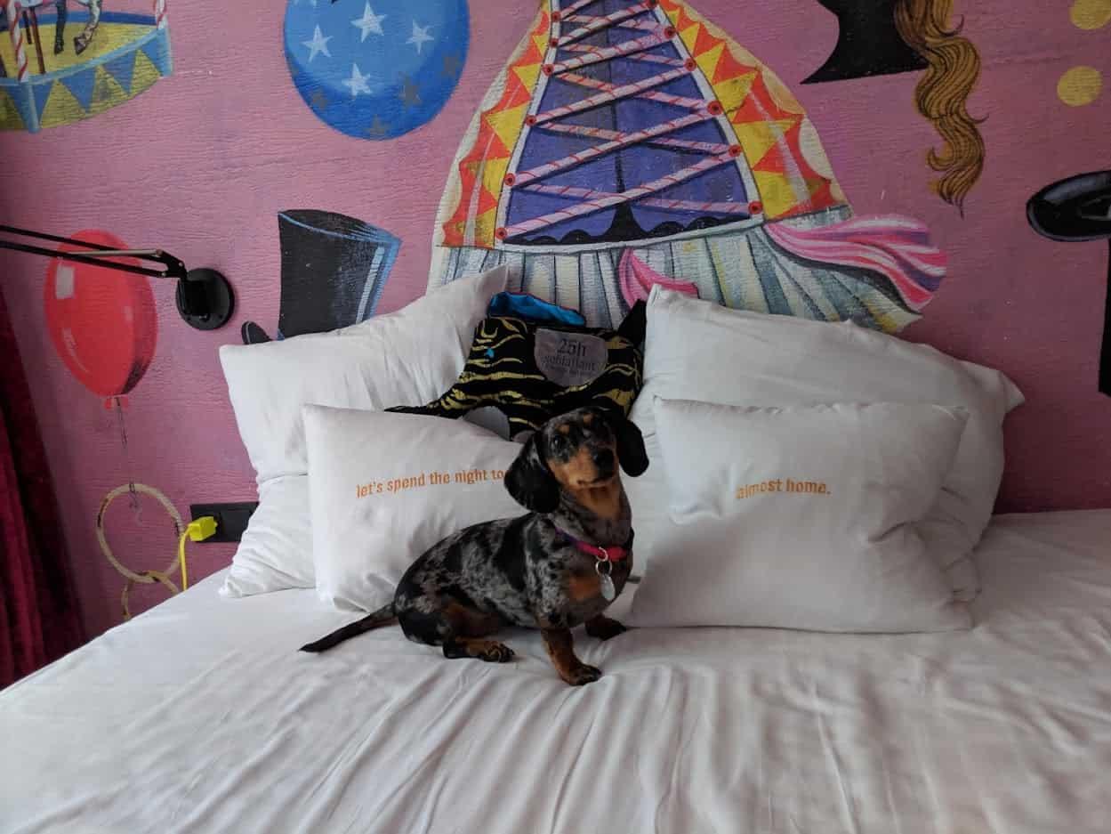 25hours hotel et les chiens