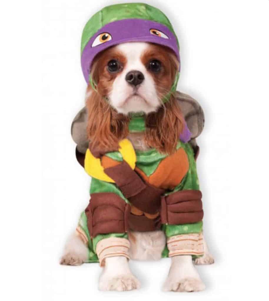 tortue ninja violette donatello costume pour chien halloween