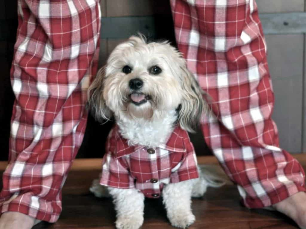 Dog & owner modelling a matching plaid pyjama set, available on Etsy