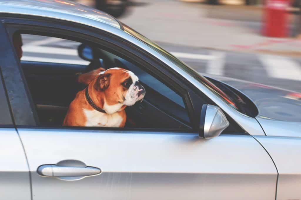 chien sur le siège avant de la voiture