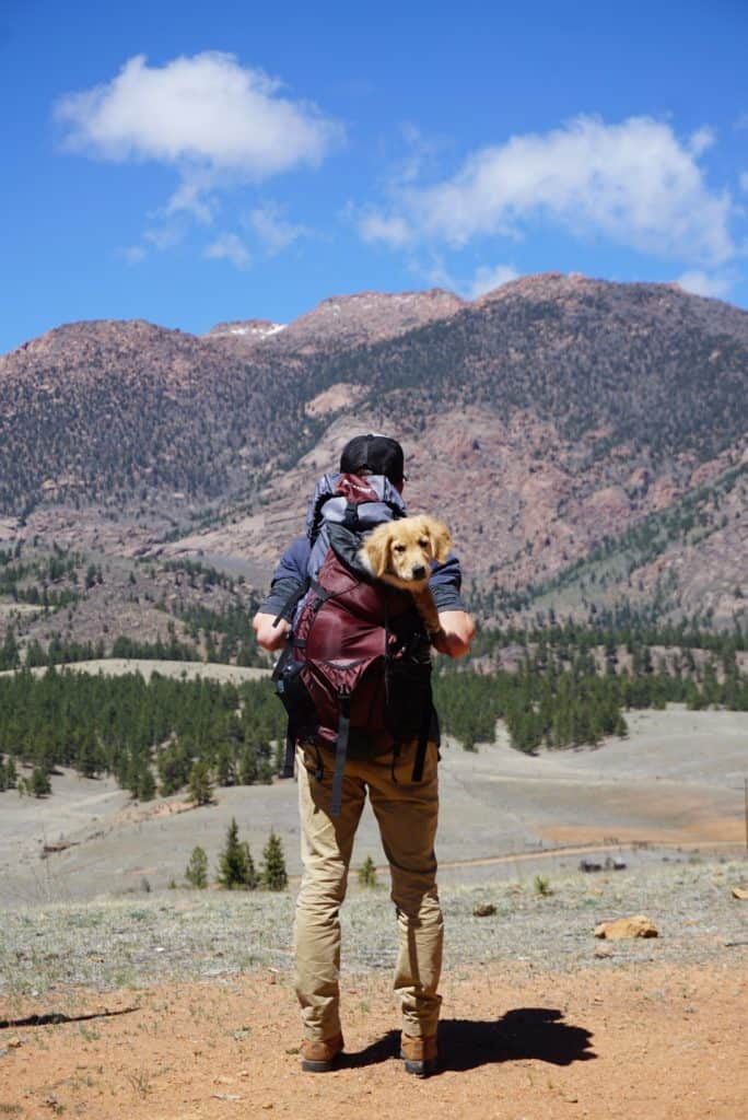 dog being carried in a backpack by a man
