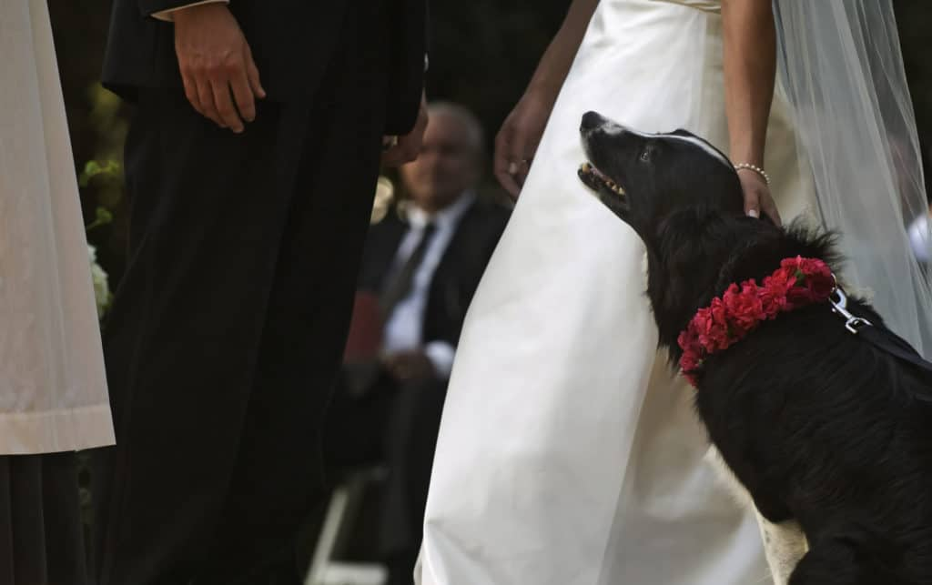 bride, groom and dog photo during their wedding vows
