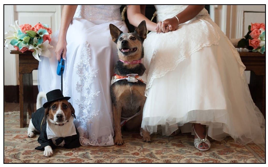 the best dogs, all dressed up for a wedding photo with the two brides holding hands