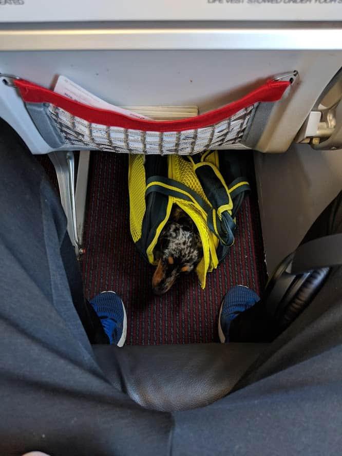 sac kurgo explorer dans l'avion