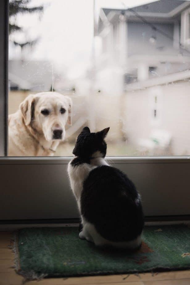 dog looking at cat through a glass door