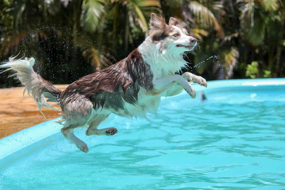 dog jumping in what I think is the neighbor's pool