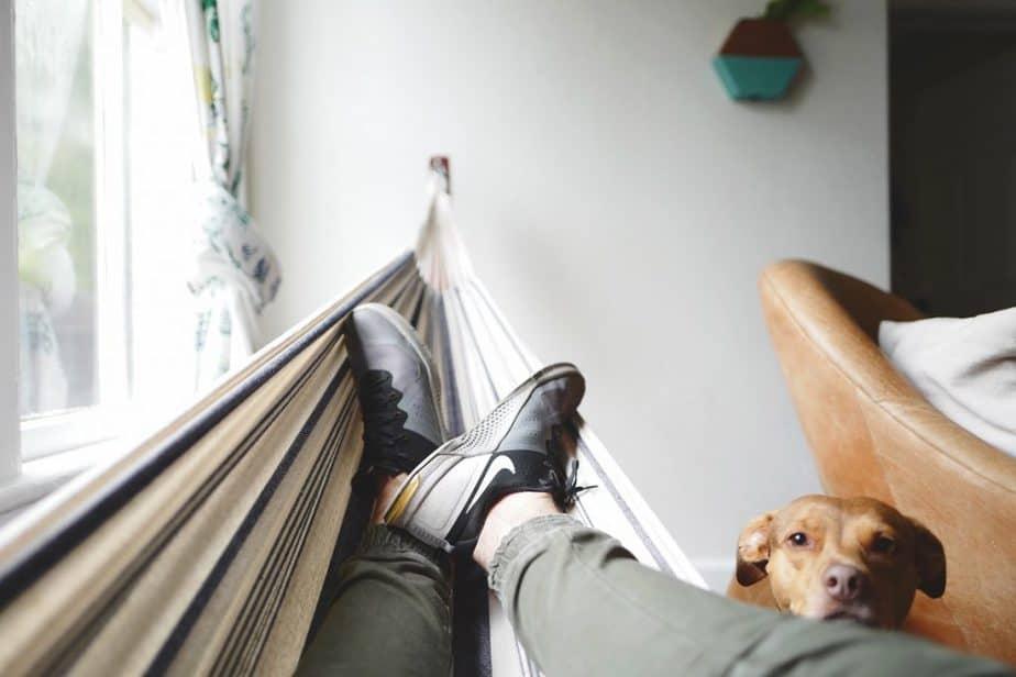 activités intérieures pour chien