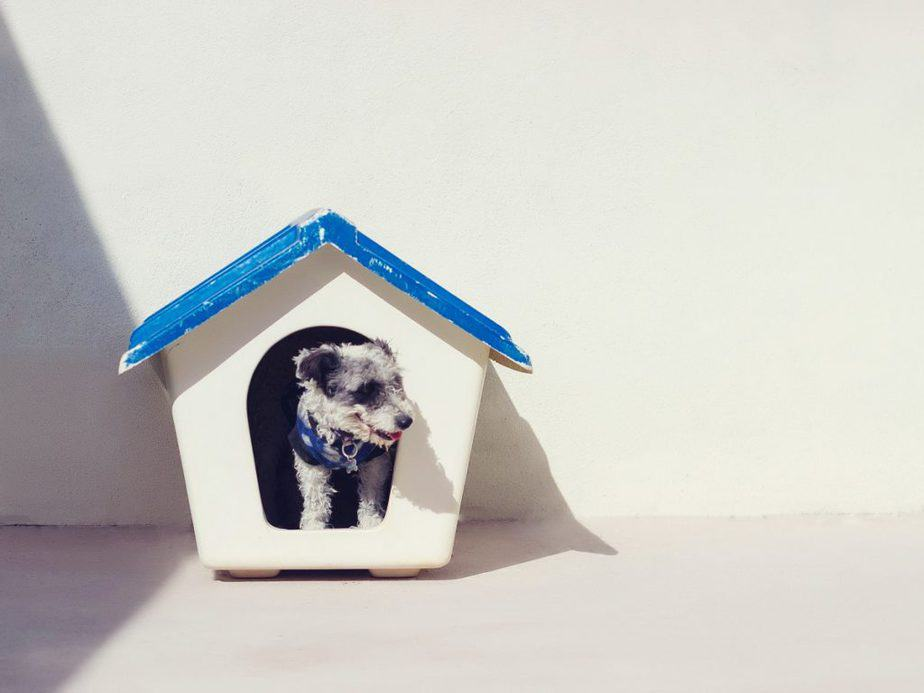 DIY dog houses should be elevated