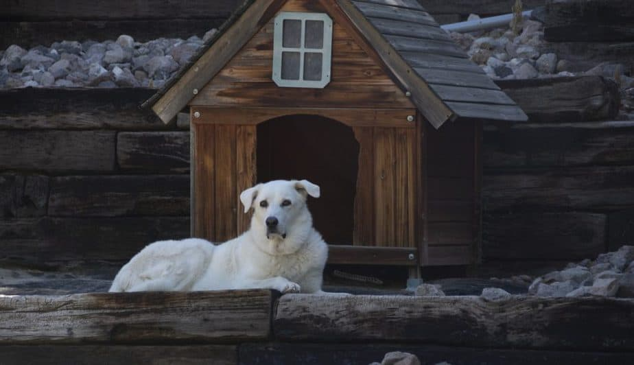 DIY dog houses made of wood