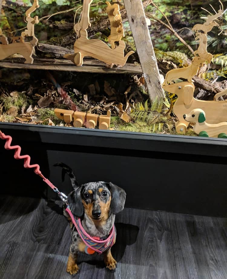 L'experience Dachshund ultime